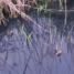 Działkowcy walczą z brudem w potoku
