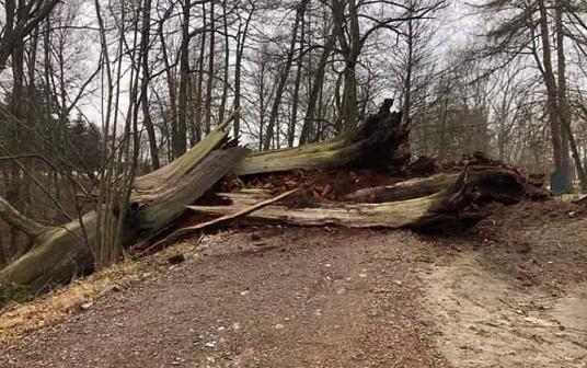 W gminie Skawina szalała wichura